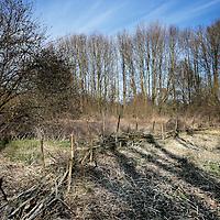 Nederland, Almere, 30 maart 2015.<br /> Rens Spanjaard initiator Weerwoud kijkt vanuit een toren op het eiland Utopia nabij Almere uit over het voedselbos.<br /> VOEDSELBOS OP UTOPIA<br /> We leggen een voedselbos aan op ons eiland. Van boom tot kruid en weer terug, alles is erop ingericht om een zo gezond en divers mogelijk bos neer te zetten dat zoveel mogelijk voedsel produceert. Wij zorgen ervoor dat je in 2022 kunt dwalen en verdwalen in een bos vol noten, appels, aardbeien en eindeloos veel ander lekkers. Om te plukken en van te genieten.<br /> Om in 2022 een voedselbos te hebben, planten we het nu al aan. Tijdens de Floriade is ons Weerwoud dan jong volwassen en vol in productie, en laat het je zien hoe een natuurlijk ecosysteem ons van voedsel kan voorzien.<br /> De Urban Greeners Rens en Koen zijn het tweespan achter het Weerwoud. Ze worden versterkt door twee voedselbosexperts van Food Forestry Nederland: Wouter Eck en Xavier San Giorgi. Ook zijn er studenten van CAH Vilentum die meedenken en helpen om er een leefbaar bos van te maken, door bijvoorbeeld onderzoek te doen.<br /> Op de foto: een houten dammuur in het voedselbos.<br /> Foto:Jean-Pierre Jans