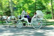 Hansom Carriage, Central Park, Manhattan, New York