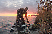 Picking up decoys after an evening hunt