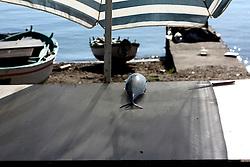 Pesce steso sotto l'ombrellone, dimenticato da qualche pescatore indaffarato.