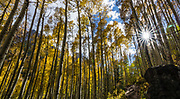 Forest along Maroon-Snowmass Trail #1975 from Maroon Lake to Buckskin Pass (11 miles round trip gaining 3000 feet) in Maroon Bells-Snowmass Wilderness of White River National Forest, near Aspen, Colorado, USA. This image was stitched from multiple overlapping photos.