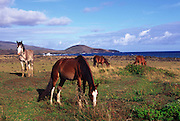Horses, Easter Island, Chile<br />