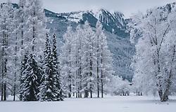 THEMENBILD - verschneite Bäume auf einer weitläufigen Wiese, die mit Schnee bedeckt ist, aufgenommen am 30. Dezember 2020 in Zell am See, Oesterreich // snow-covered trees on a vast meadow covered with snow, in Zell am See, Austria on 2020/12/30. EXPA Pictures © 2020, PhotoCredit: EXPA/Stefanie Oberhause