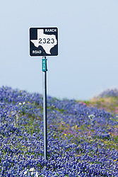 Bluebonnets and wildflowers along road  in the Texas Hill Country, USA