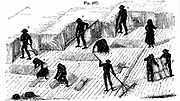 Crop Rotation: Harvesting corn. In Norfolk 4 course system, wheat planted first year, followed by turnips, then barley, often underplanted with grass or grass and clover ley to be used for hay or grazing in 4th year. Reaping with scythe, binding and stook