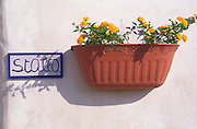 Wall mounted flower pot on stable wall in Sicily, Italy