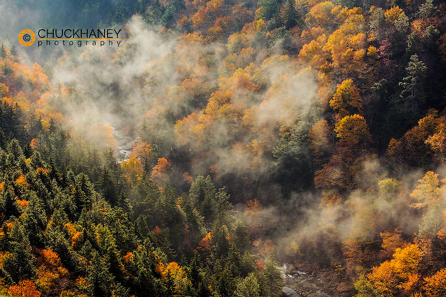 Looking down into The Blackwater River in autumn from Pendleton Point Blackwater Falls State Park in Davis, West Virginia, USA