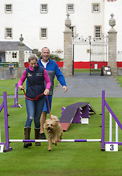 Robin Barrie, a personal training and fitness instructor from Biggar, with her Border and Irish terrier mongrel Scamp testing his skills on the agility course during A Dogs' Day Out at Traquair House. pic copyright Terry Murden @edinburghelitemedia