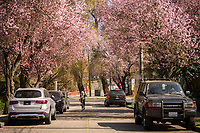 Montlake Neighborhood (March 21, 2020).