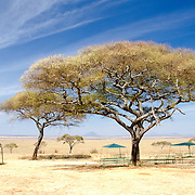 One of the few picnic grounds next to the swamp at Tarangire National Park in northern Tanzania not far from Ngorongoro Crater and the Serengeti.