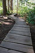 Boardwalk trail near Cape Flattery
