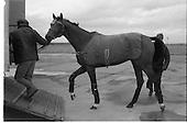 1979 - Ninski Major and Torus arrive at Dublin Airport.  (M95).