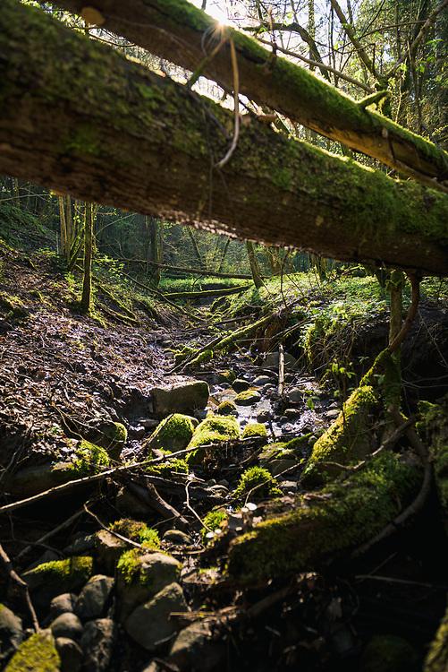 "Small rocky stream in spring sunlight with lots of fallen trees across it, Nature reserve ""Ruņupes ieleja"", Latvia Ⓒ Davis Ulands | davisulands.com"