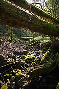 "Small rocky stream in spring sunlight with lots of fallen trees across it, Nature reserve ""Ruņupes ieleja"", Latvia Ⓒ Davis Ulands   davisulands.com"