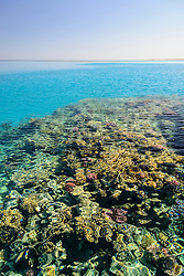 Buntes Korallenriff schimmert durch Oberflaeche, Colourful Coralreef shining through the surface, Marsa Alam, Wadi Gimal, Rotes Meer, Ägypten, Red Sea, Egypt