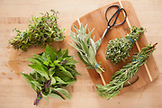 Rosemary, thyme, sage, basil, and oregano