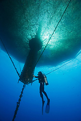 scuba diving worker, checking 3,000-cubic-meter submersible fish pen installed in open ocean just off Kona Coast to raise Kona Kampachi, Hawaiian yellowtail, aka almaco jack or kahala, Seriola rivoliana, Kona Blue Water Farms, Big Island, Hawaii, USA, Pacific Ocean