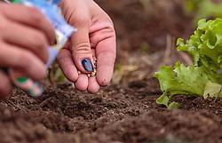 THEMENBILD - eine Frau beim verteilen von Saatgut, aufgenommen am 10. April 2018 in Kaprun, Österreich // a Woman sowing seeds, Kaprun, Austria on 2018/04/10. EXPA Pictures © 2018, PhotoCredit: EXPA/ JFK