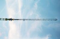 Berlin februar 2012.<br /> Blå himmel og ei heisekran ved en byggeplass i Berlin.<br /> Foto: Svein Ove Ekornesvåg