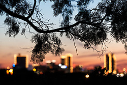 Downtown Fort Worth at sunset, framed by mesquite tree, Tandy Hills Natural Area, Fort Worth, Texas, USA. Tandy Hills is an indigenous remnant prairie.