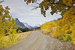 Fall Colors, Cutbank Canyon, Glacier National Park