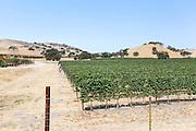 Vineyard near Carmel Valley Monterey County California, USA