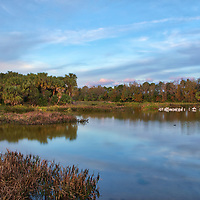 South Florida landscape photography from New England based outdoor photographer Juergen Roth showing the waterscape of Green Cay Nature Center and Wetlands with a flocking of birds in Boynton Beach, Florida. Green Cay and Wakodahatchee Wetlands are amazing nature area for viewing and photographing wildlife in Florida. <br /> <br /> Florida nature photography images are available as museum quality photo prints, canvas prints, wood prints, acrylic prints or metal prints. Fine art prints may be framed and matted to the individual liking and interior design room project needs:<br /> <br /> https://juergen-roth.pixels.com/featured/green-cay-nature-center-and-wetlands-juergen-roth.html<br /> <br /> All Green Cay Nature Center and Wetlands photography images are available for photography image licensing at www.RothGalleries.com. Please contact me direct with any questions or request.<br /> <br /> Good light and happy photo making!<br /> <br /> My best,<br /> <br /> Juergen<br /> Prints: http://www.rothgalleries.com<br /> Photo Blog: http://whereintheworldisjuergen.blogspot.com<br /> Instagram: https://www.instagram.com/rothgalleries<br /> Twitter: https://twitter.com/naturefineart<br /> Facebook: https://www.facebook.com/naturefineart