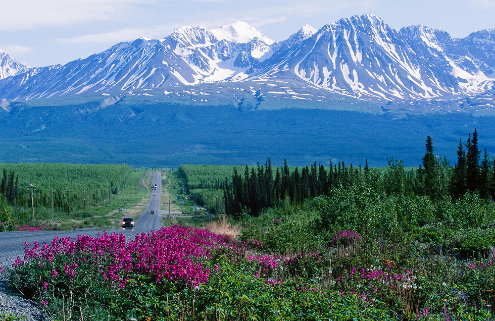 Canada. Haines Junction. Alaska highway through Haines Junction with fireweed and automobiles.