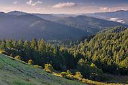 Trees and forest, Castle Rock State Park, Santa Cruz Mountains, Santa Cruz County, California