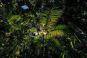 Sunlight penetrates through the canopy of the Amazon rainforest, Brazil.