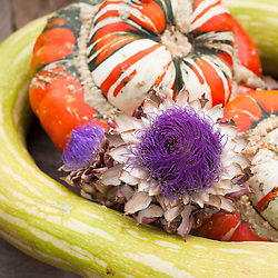 Summer squash 'Tromboncino' with Squash 'Turk's Turban' and artichoke