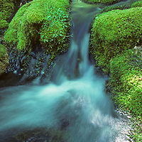 Mossy stream near Fern Spring, Yosemite Valley.