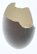 empty egg shell