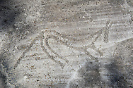 Petroglyph, rock carving, of a an animal carved by the ancient Camuni people in the iron age between  900-1200 BC. Rock 26-27, Foppi di Nadro, Riserva Naturale Incisioni Rupestri di Ceto, Cimbergo e Paspardo, Capo di Ponti, Valcamonica (Val Camonica), Lombardy plain, Italy .<br /> <br /> Visit our PREHISTORY PHOTO COLLECTIONS for more   photos  to download or buy as prints https://funkystock.photoshelter.com/gallery-collection/Prehistoric-Neolithic-Sites-Art-Artefacts-Pictures-Photos/C0000tfxw63zrUT4<br /> If you prefer to buy from our ALAMY PHOTO LIBRARY  Collection visit : https://www.alamy.com/portfolio/paul-williams-funkystock/valcamonica-rock-art.html