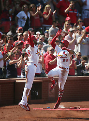 September 14, 2017 - St Louis, MO, USA - The St. Louis Cardinals' Tommy Pham, right, high-fives teammate Jose Martinez as he returns to the dugout after hitting a two-run home run in the fifth inning against the Cincinnati Reds on Thursday, Sept. 14, 2017, at Busch Stadium in St. Louis. The Cards won, 5-2. (Credit Image: © Chris Lee/TNS via ZUMA Wire)
