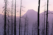 Ghostly Silhouttes of one of Glacier National Park's historic forest fires.