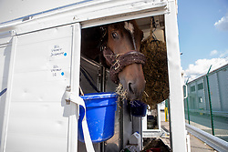 Departure of the horses for Calgary at Liege Airport, Belgium<br /> DM Jacqmotte, Vermeir Wilm, BEL, <br /> Spruce Meadows Masters - Calgary<br /> © Hippo Foto - Dirk Caremans<br /> 01/09/2018