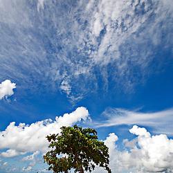 """""""Dunas de Itaúnas (Paisagem) fotografado em Conceição da Barra, Espírito Santo -  Sudeste do Brasil. Bioma Mata Atlântica. Registro feito em 2010.<br /> <br /> <br /> <br /> ENGLISH: Itaunas dunes  photographed in Conceicao da Barra, Espírito Santo - Southeast of Brazil. Atlantic Forest Biome. Picture made in 2010."""""""