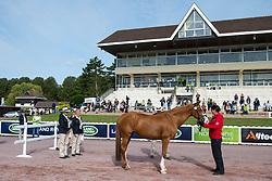 Hannelore Brenner, (GER), Women of the World - Horse Inspection Para Dressage - Alltech FEI World Equestrian Games™ 2014 - Normandy, France.<br /> © Hippo Foto Team - Jon Stroud<br /> 25/06/14