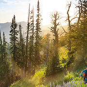 Andrew Whiteford riding Singletrack at sunset with wildflowers during the summer months in the Tetons. Mail Cabin Trail.