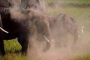 Elephant family, Amboseli National Park, Kenya.