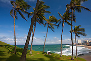 Salvador_BA, Brasil...Litoral de Salvador, capital da Bahia. Na foto coqueiros na Praia da Barra...Coast of Salvador, capital of Bahia. In the photo coconut tree at the Praia da Barra...Foto: JOAO MARCOS ROSA / NITRO