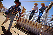 11 MAY 2002 - BUCKEYE, ARIZONA, USA: Paul Brashears, left, stretches behind the chutes at the Arizona West PRCA Rodeo in Buckeye, AZ, May 11, 2002. It was the first year for the Arizona West PRCA Rodeo. PHOTO BY JACK KURTZ