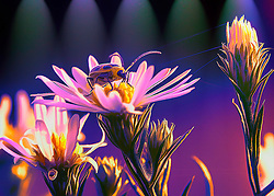 A beetle sit atop wildflowers with a glow of violet under a row of spotlight glow