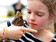 "© Licensed to London News Pictures. 25/03/2013. London, UK. Jasmine Fields Hutchinson aged 7 looks at butterflies that have settled on her hand.  Children play with butterflies at the Natural History Museum's new exhibition ""Sensational Butterflies"" which runs from 29th March to 15th September 2013.   The exhibition features over 500 tropical butterflies  and a chance to watch butterflies emerge from chrysalises trough a hatchery window. Photo credit : Stephen Simpson/LNP"