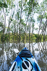 Kayak on water near Big Spring after Trinity River flood, Great Trinity Forest, Dallas, Texas, USA