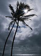 Silhouette of palm trees against a stormy sky, Waikiki Beach, Honolulu, O'Ahu, Hawai'i