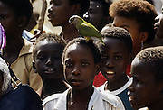 Chld with parrot perched on head, Banjul, the Gambia, Africa