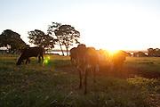 Formiga_MG, Brasil...Fazenda Ponte Vila no municipio de Formiga, Minas Gerais...The Ponte Vila farm in Formiga, Minas Gerais...Foto: MARCUS DESIMONI / NITRO...............