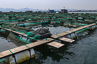 FIsh and musselfarms by Zhifu Island (Chinese: 芝罘島), Shandong Province, China, byt the Bohai Sea, that is the inner part of the Yellow Sea where both the Yellow River and Hai He flow into.<br /><br />Conservation: The Yellow Sea is one of the most threatened marine areas on earth. Land reclamation has destructed more than 60% of tidal wetlands in only 50 years. Rapid coastal development for agriculture, aquaculture and industrial.development are primary drivers of coastal destruction in the region. In addition pollution, harmful algal blooms, invasion of introduced species are having a negative effect. There are 25 intentionally introduced species and 9 unintentionally introduced species in the Yellow Sea marine ecosystem.